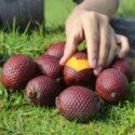 Aguaje Powder (150 g -5.29 oz) – Buy Superfruit Powder 100% Natural
