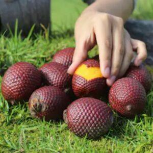 Buy Superfruit Powder 100% Natural